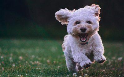 Puppy Steps!
